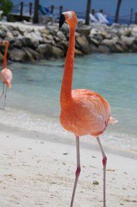 Destination Wedding Locations Aruba