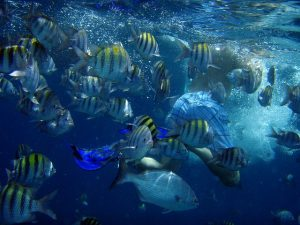 Destination Wedding Locations Aruba diving