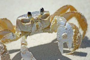 Destination Wedding Locations Bahamas Crab