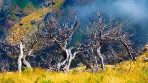 Destination Wedding Locations Madeira tree