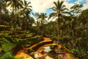Destination Wedding Locations Bali forest