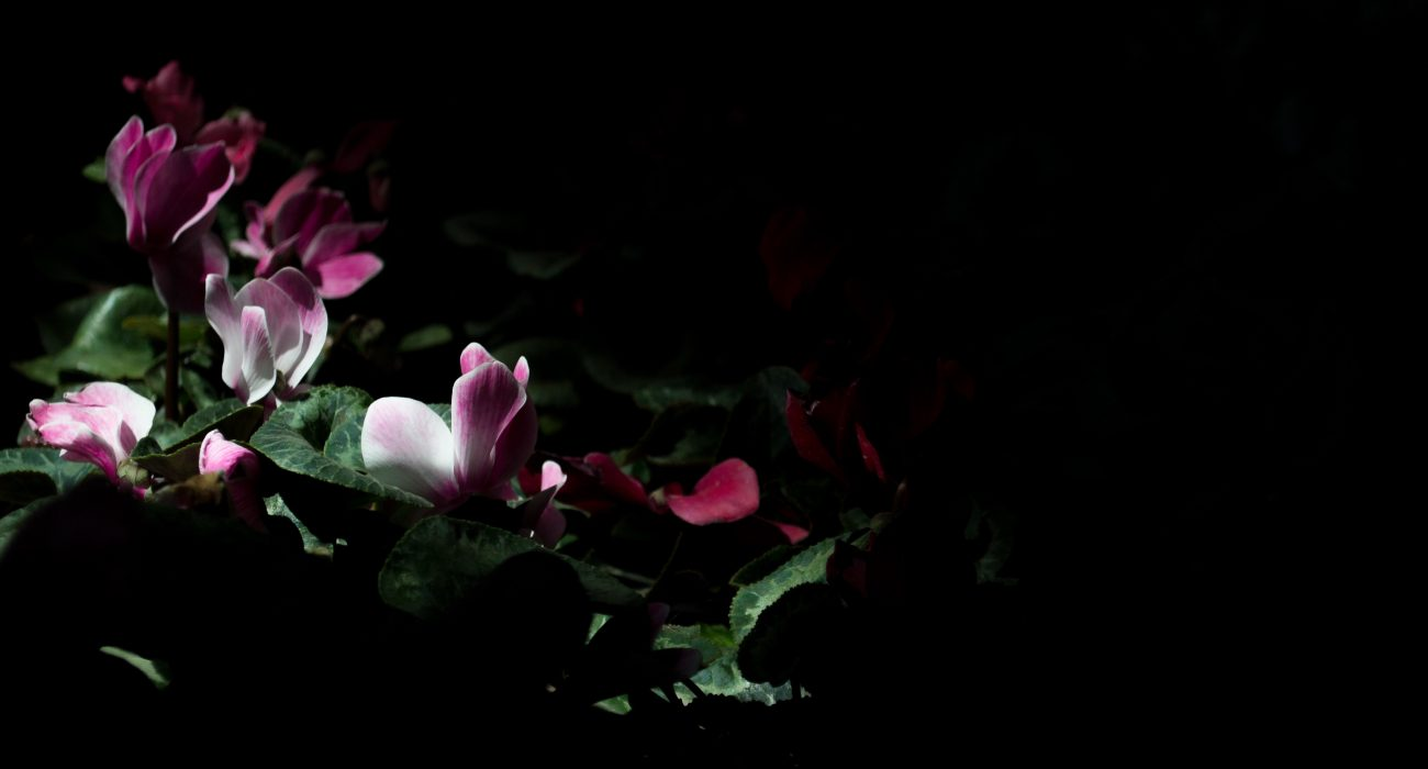 From the Depths of Darkness into the Light_flowers