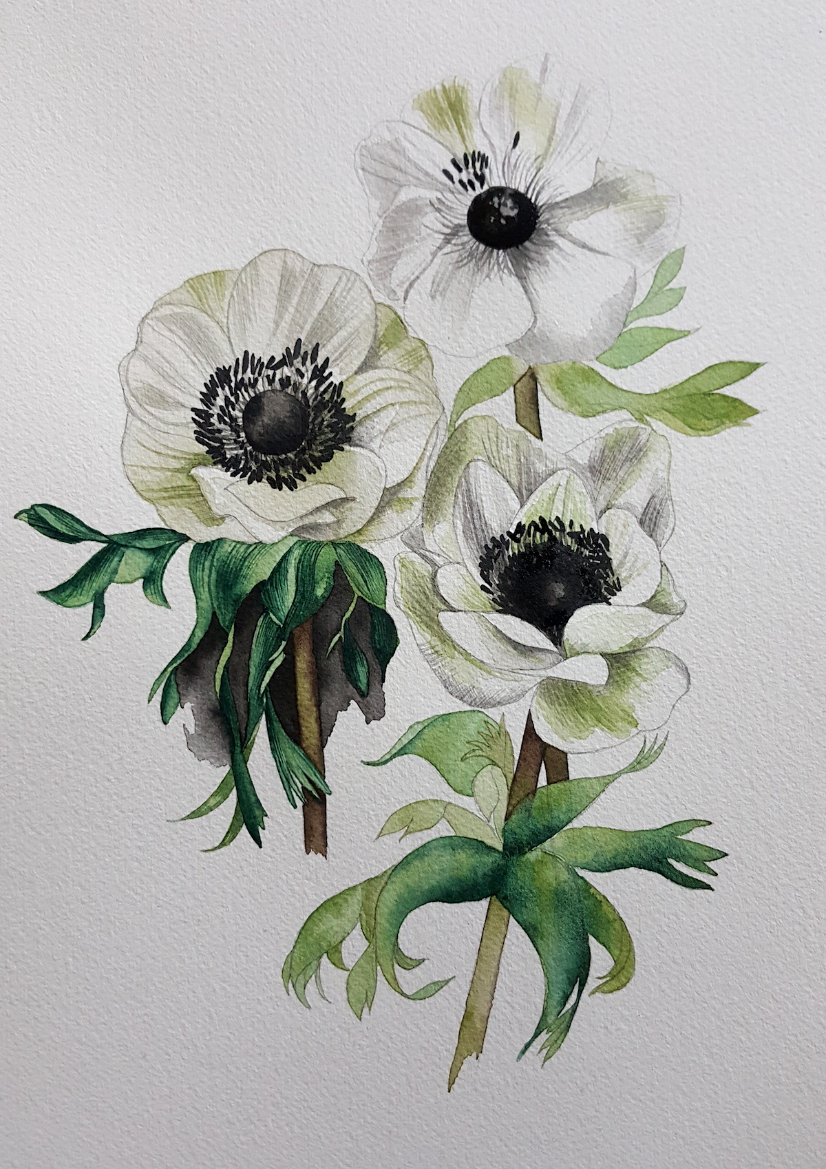 Watercolour Illustration - adding darker flower centres