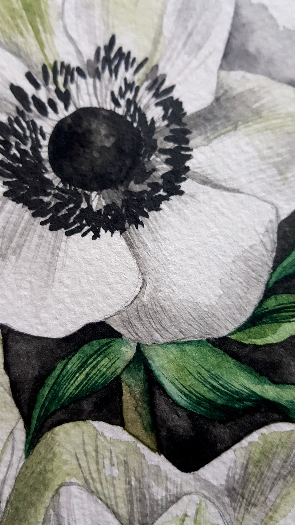 Watercolour Illustration - anemone flower's centre with black details