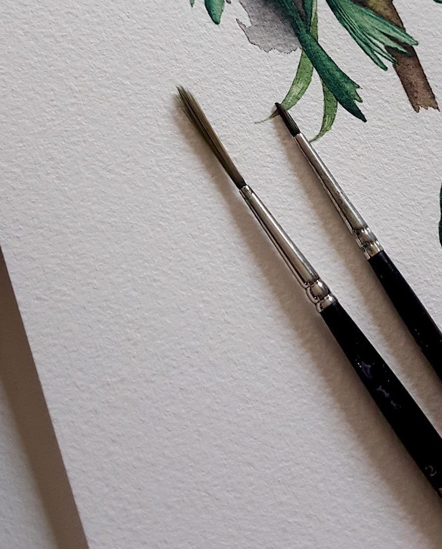 Watercolour Illustration - paintbrushes used for the more detailed watercolour