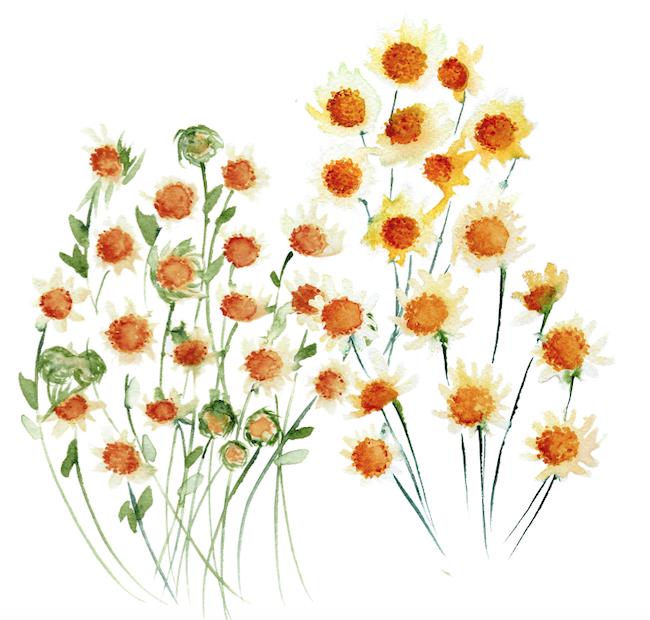 Bespoke watercolour wedding invitations daisies