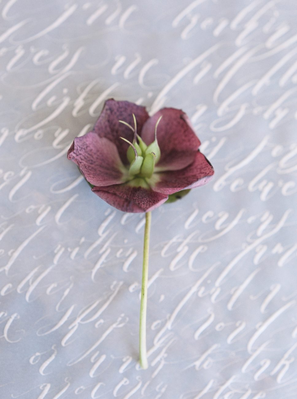 Moody Black Wedding Inspiration_red flower on vellum with silver calligraphy