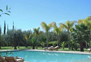 Luxury Wedding in Morocco Villa Marrak pool with palm trees