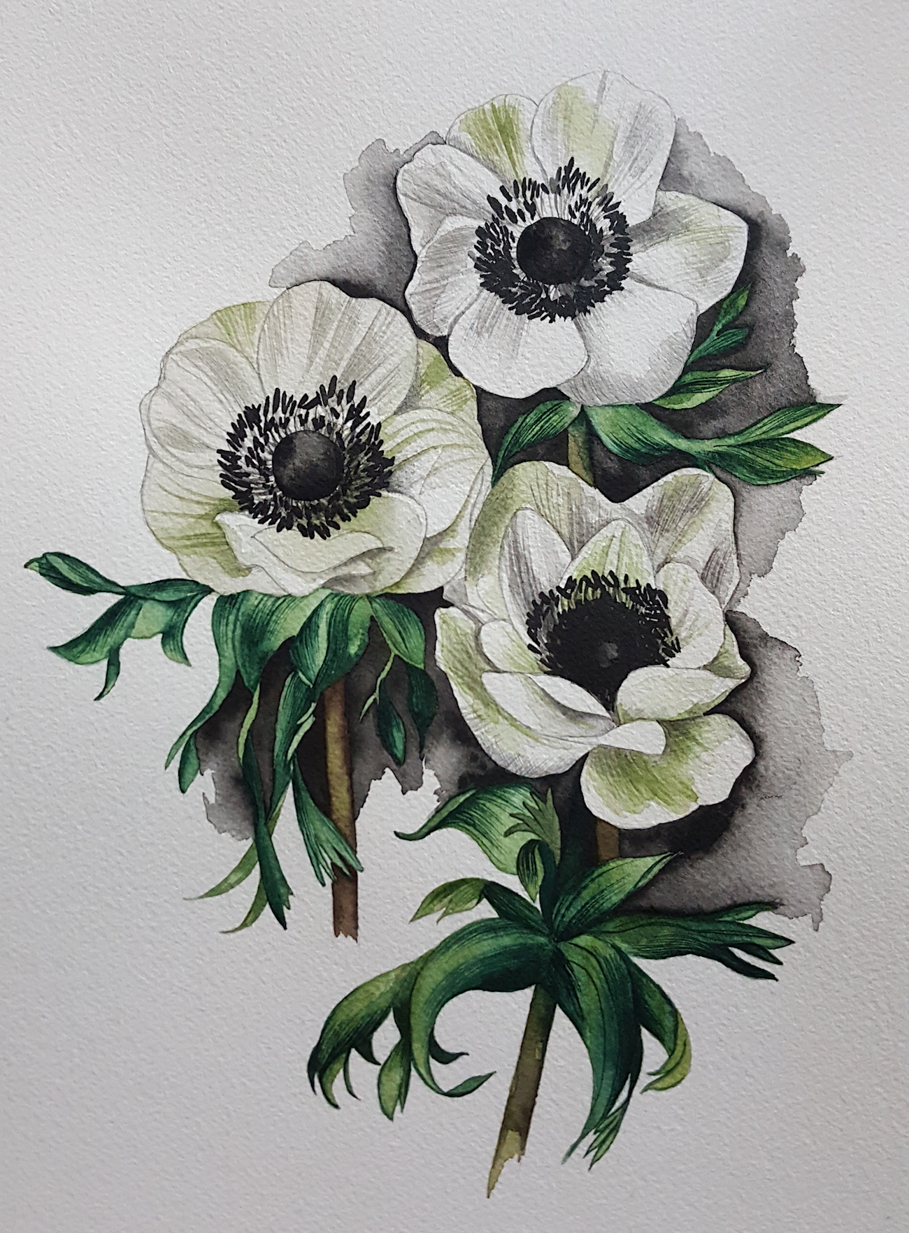 Finished watercolour image of anemones with a black wash around