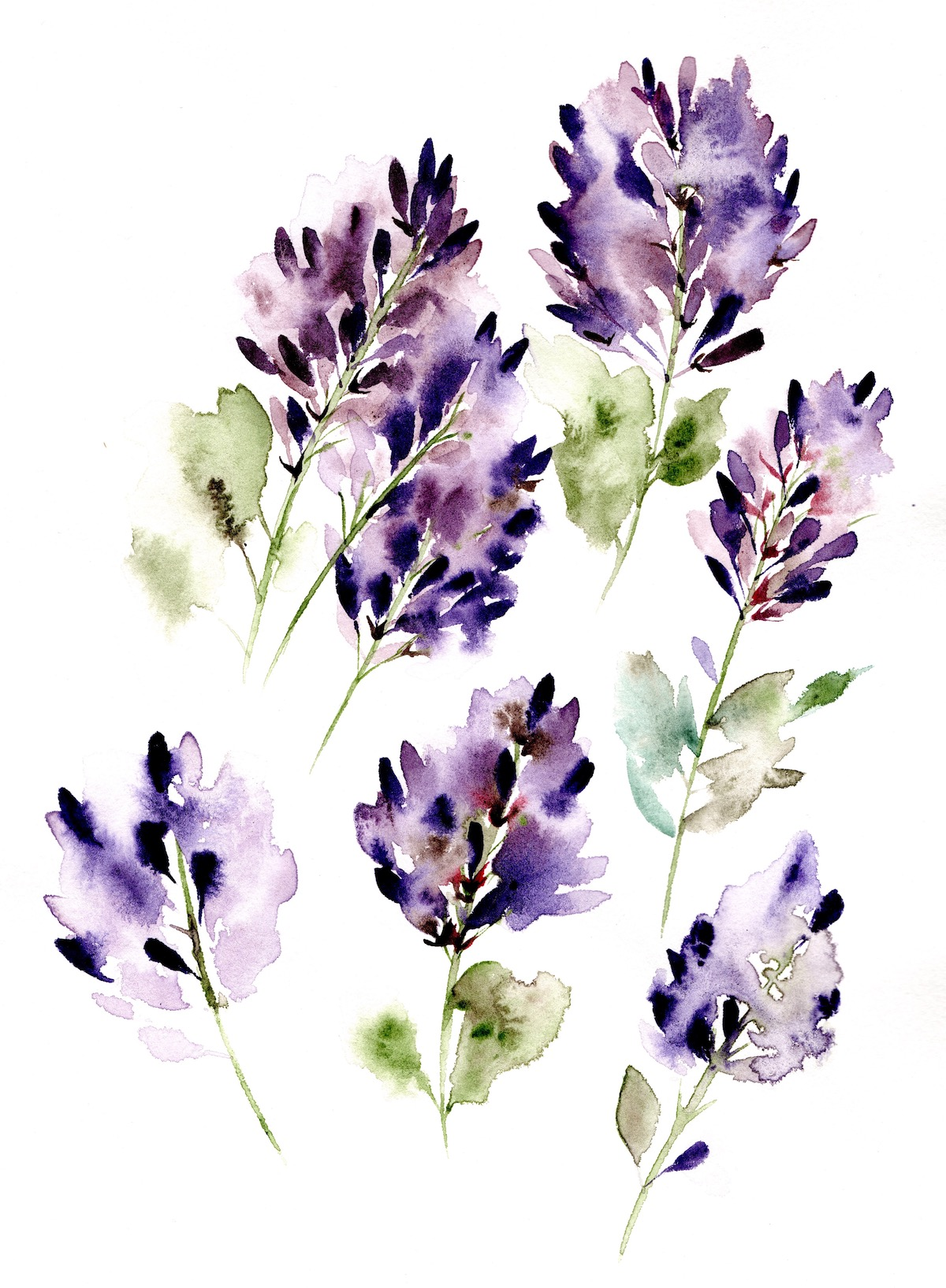 Llilac flowers watercolour illustration