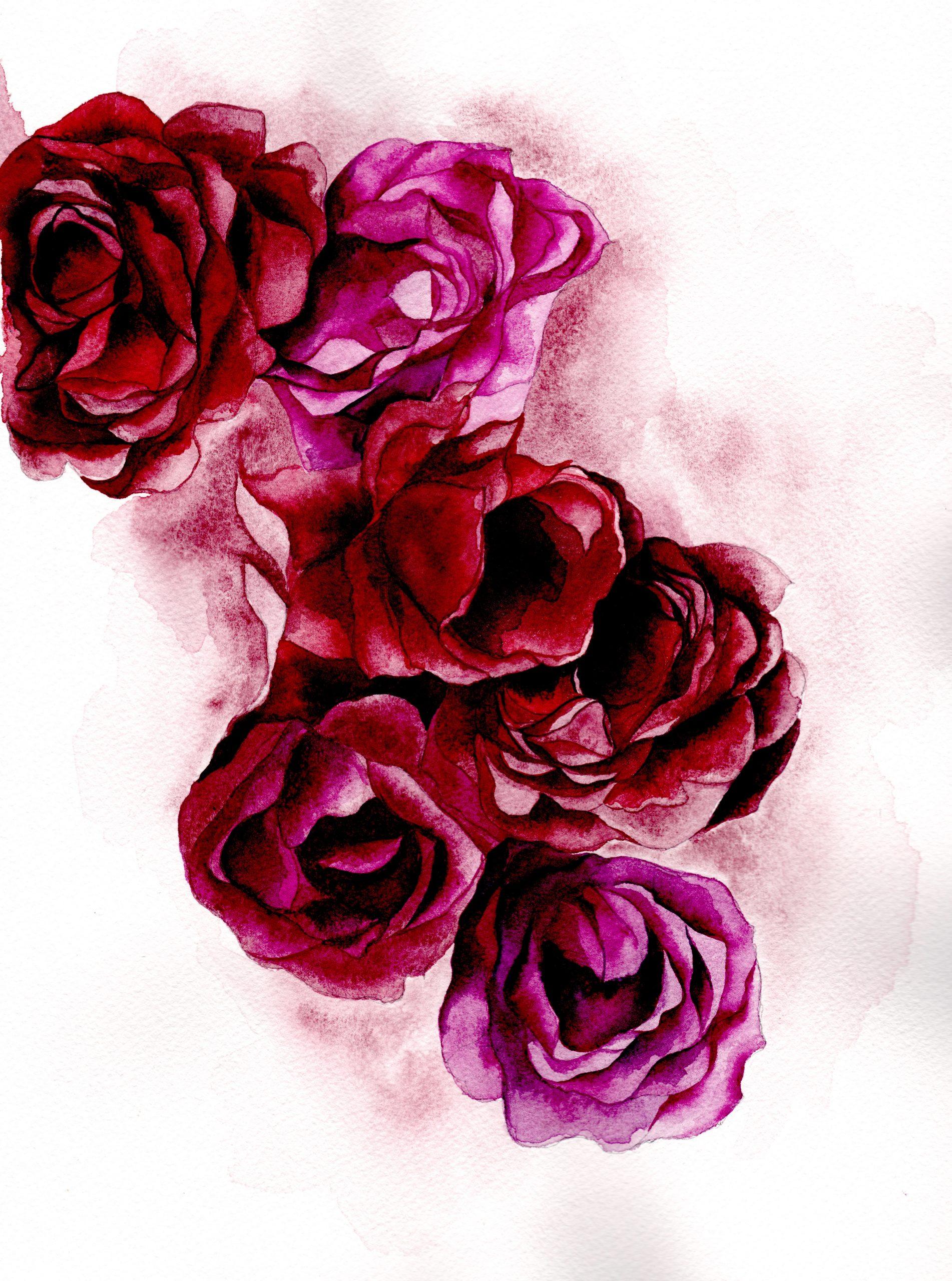Rose watercolour illustration