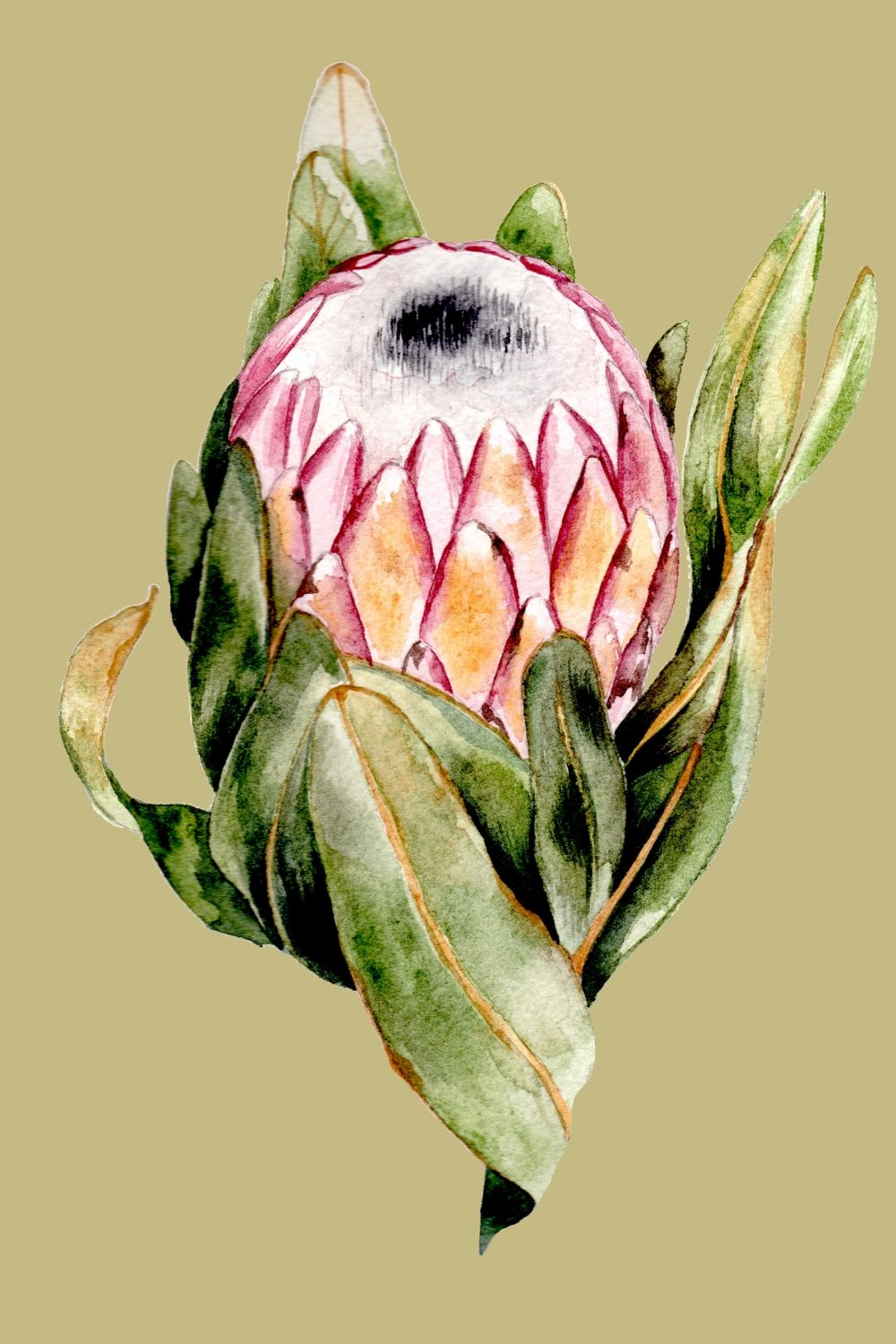 Dusky Pink Protea with large leaves watercolour painting for wedding invitations
