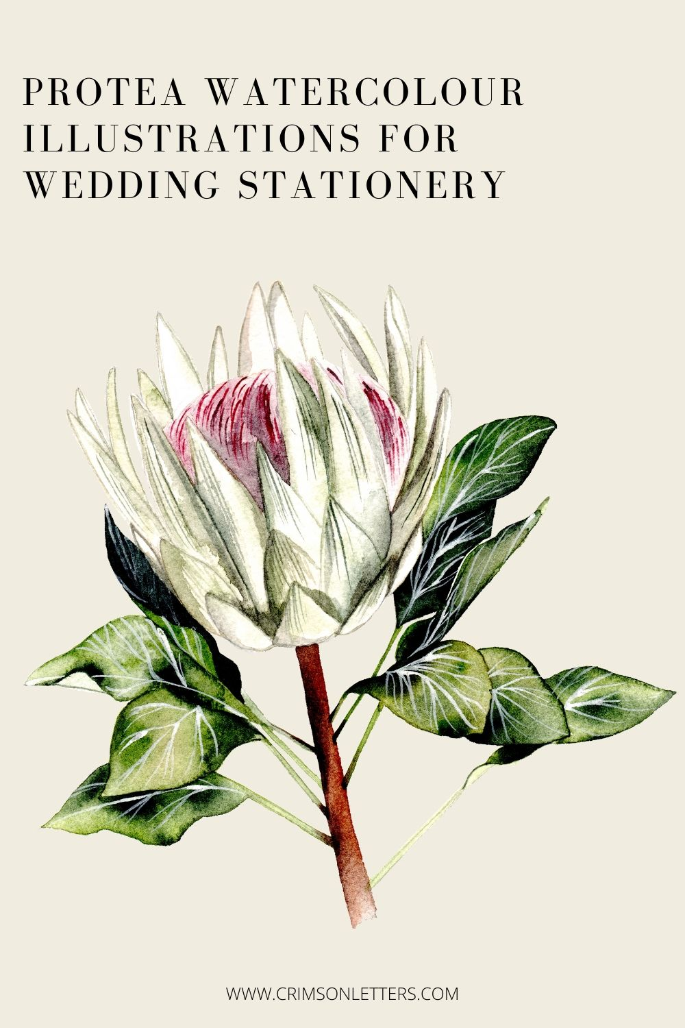 Protea watercolour illustrations for wedding stationery