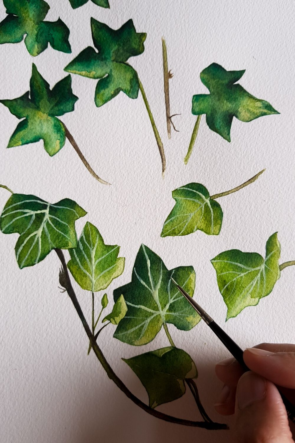 Watercolour foliage of some green ivy leaves for a custom floral wedding invitation suite