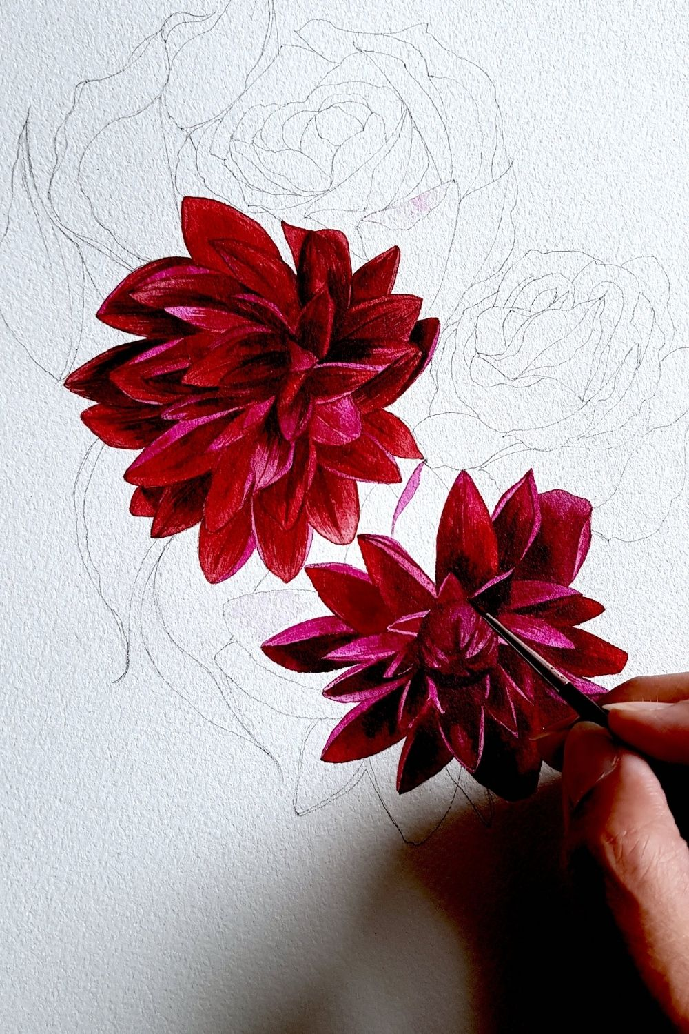 Red and deep burgundy dahlia flower watercolour illustration