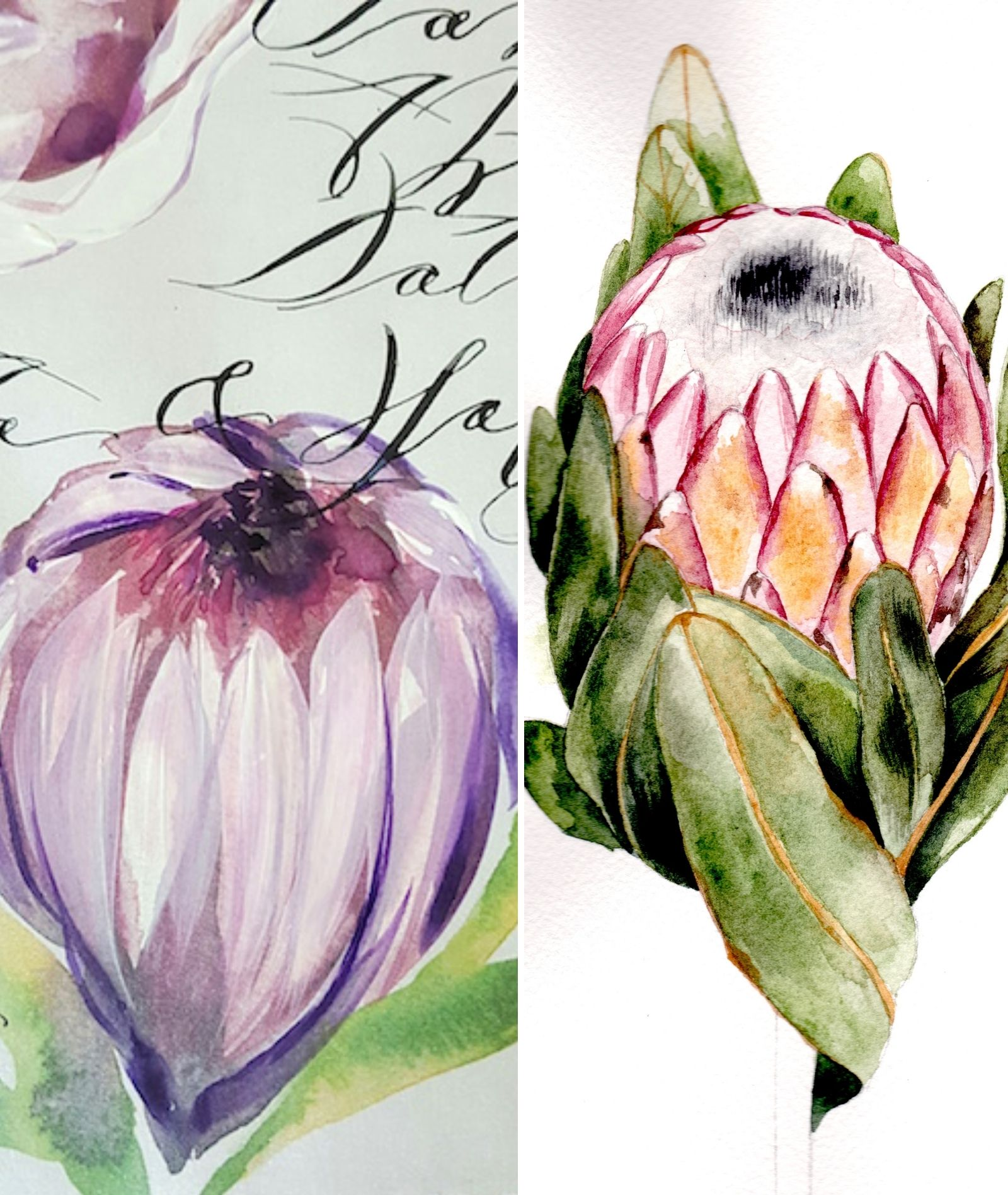 Before and after protea watercolour paintings